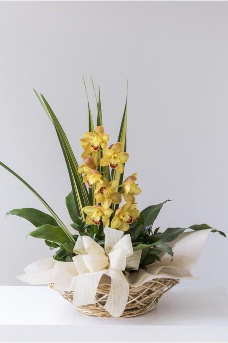 Canasto Bejuco Ovalado Vara de Orquideas