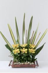 Guadua Canoa Orquidea Recta