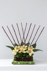 Bambu Piscina Orquideas Recta
