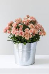 Laton Hielera Grande Rosa Spray Clasica